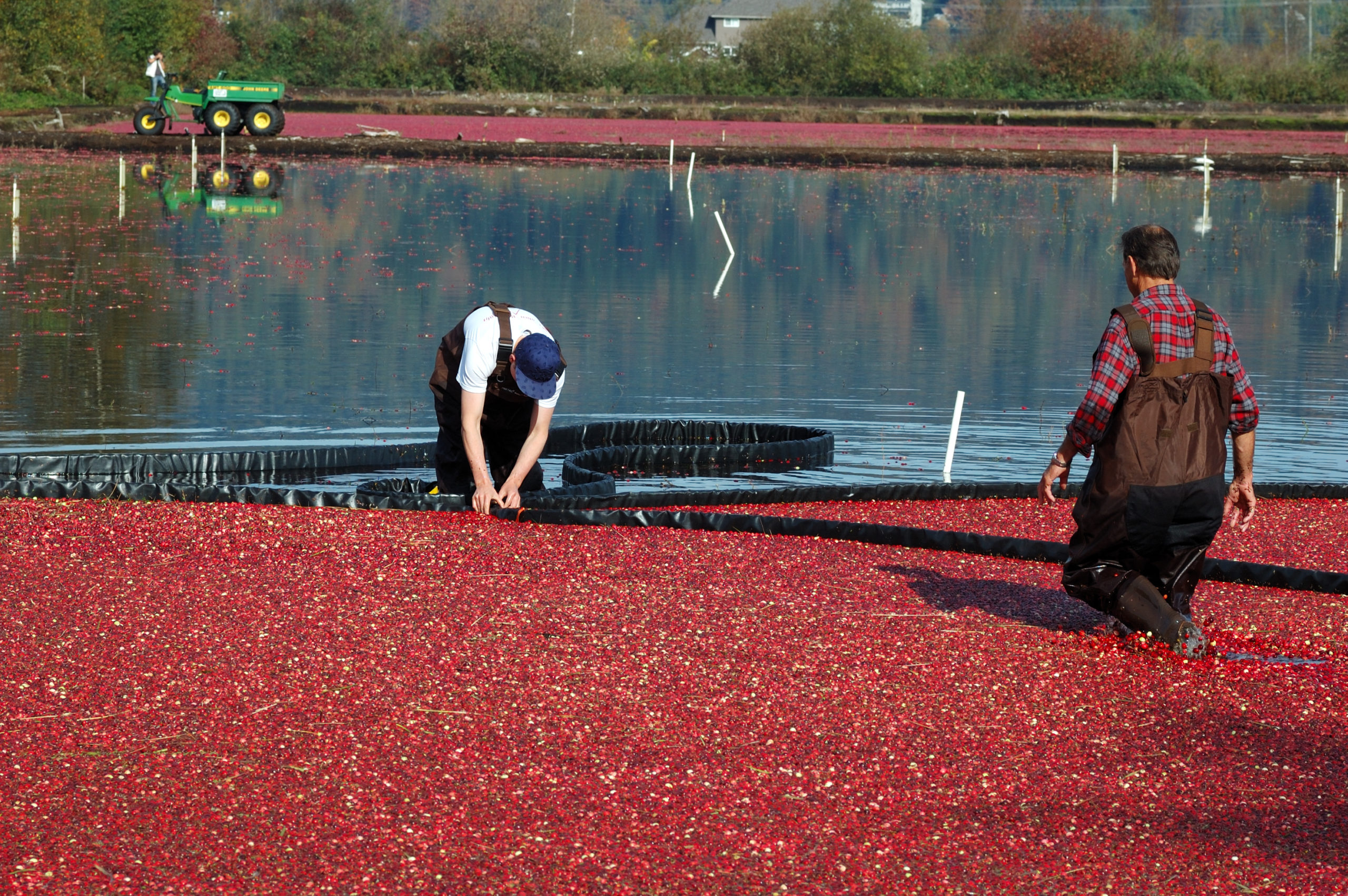 cranberry farmer, appos advisors